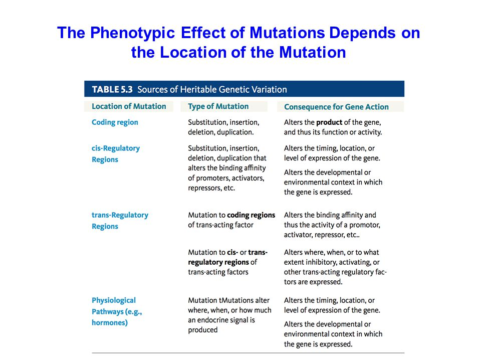 The Phenotypic Effect of Mutations Depends on the Location of the Mutation
