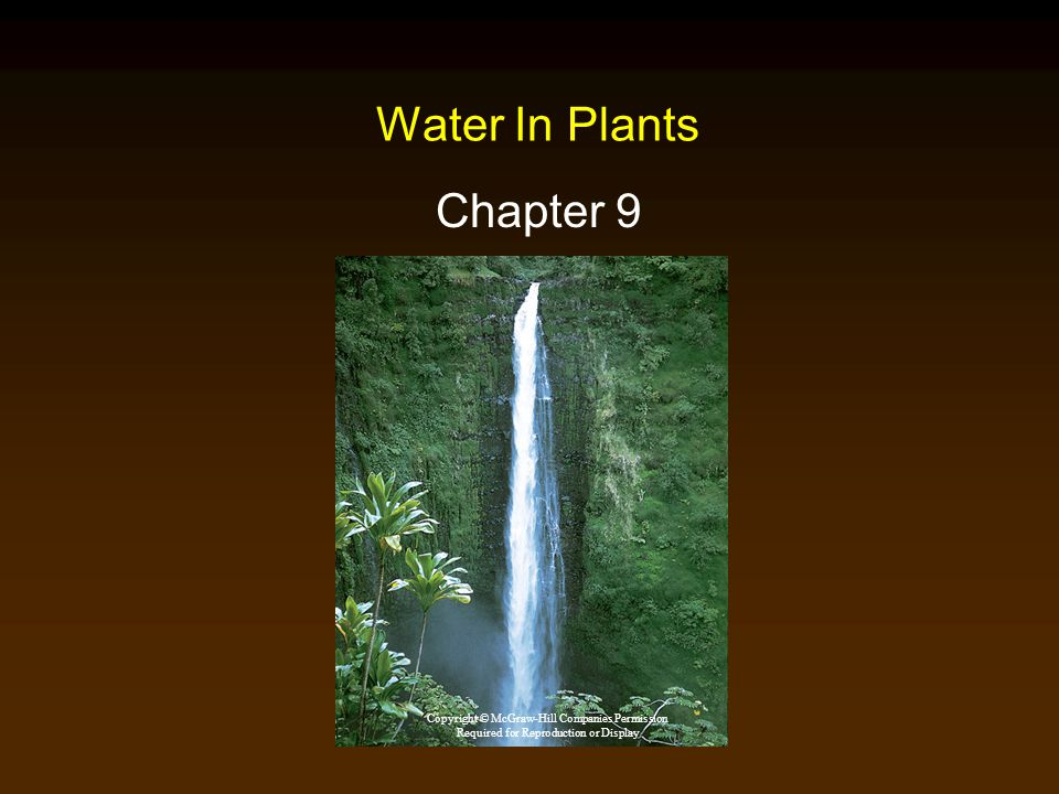 Water In Plants Chapter 9 Copyright © McGraw-Hill Companies Permission