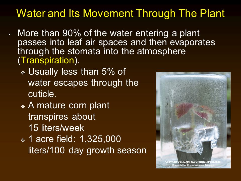 Water and Its Movement Through The Plant
