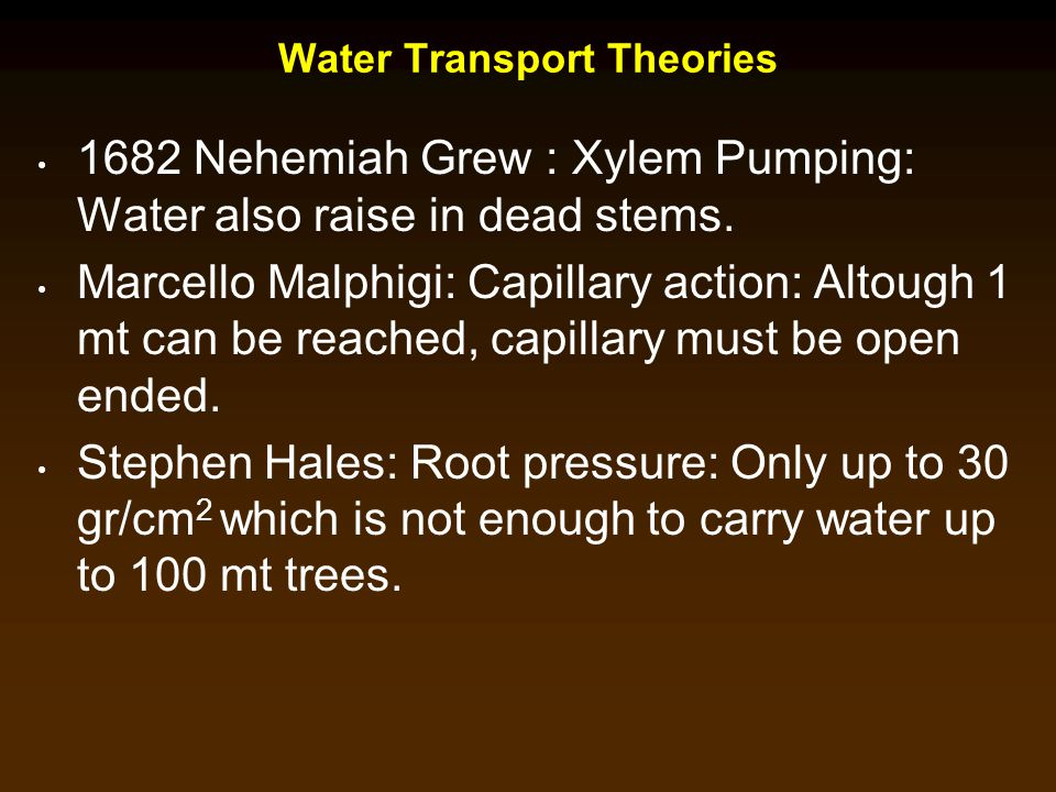Water Transport Theories