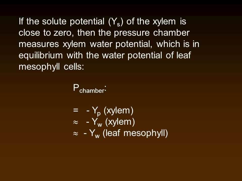 If the solute potential (Ys) of the xylem is