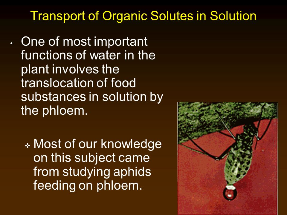 Transport of Organic Solutes in Solution