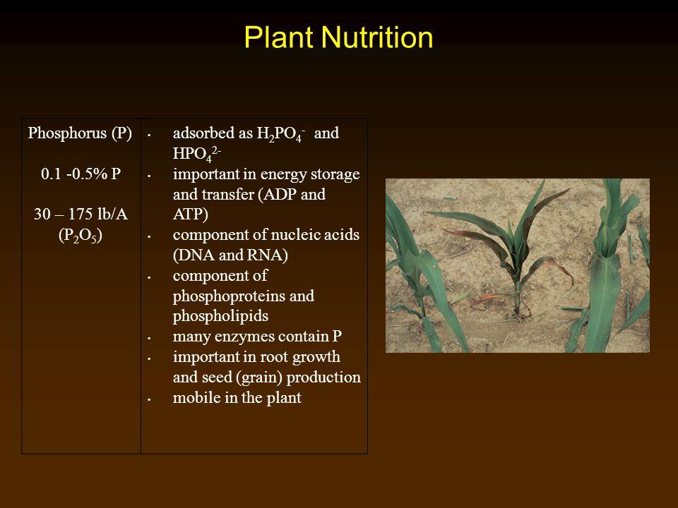 Plant Nutrition Phosphorus (P) 0.1 -0.5% P 30 – 175 lb/A (P2O5)
