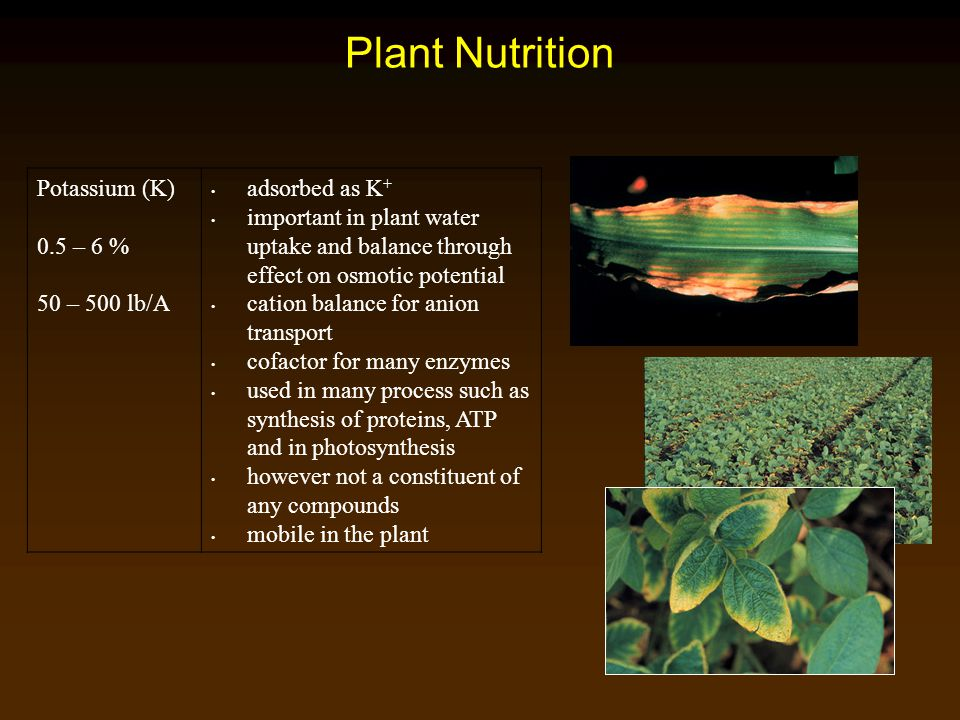 Plant Nutrition Potassium (K) 0.5 – 6 % 50 – 500 lb/A adsorbed as K+