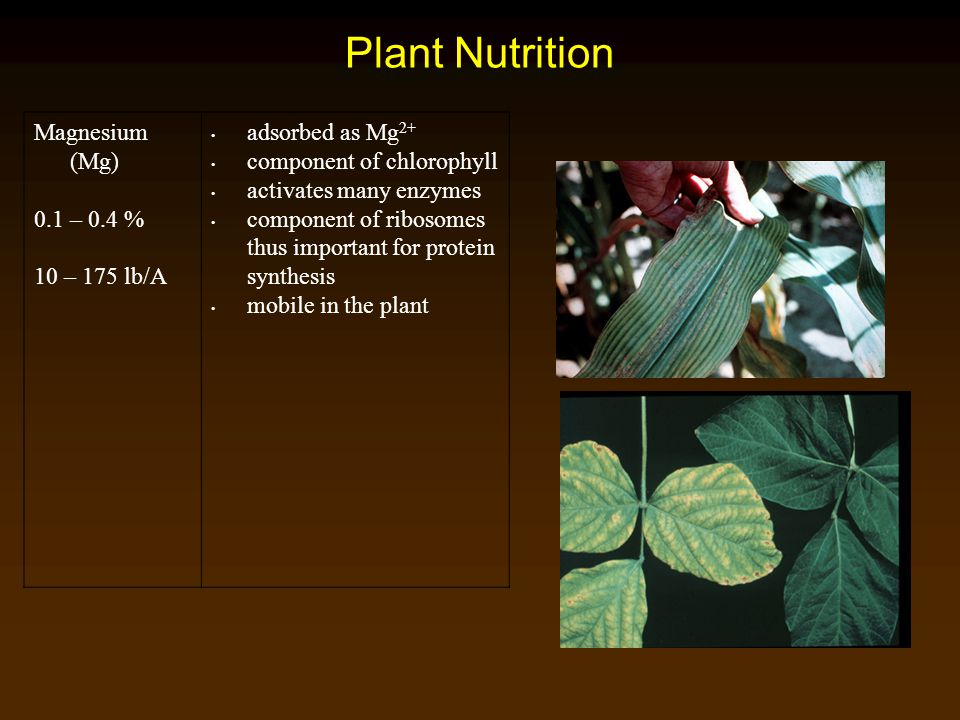 Plant Nutrition Magnesium (Mg) 0.1 – 0.4 % 10 – 175 lb/A