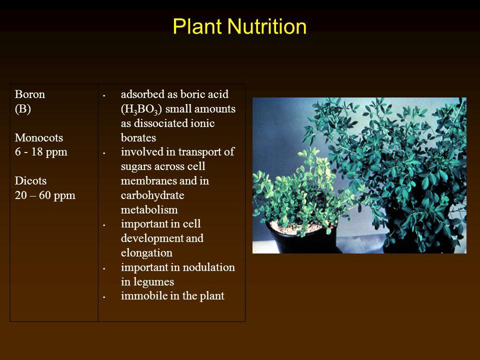 Plant Nutrition Boron (B) Monocots 6 - 18 ppm Dicots 20 – 60 ppm