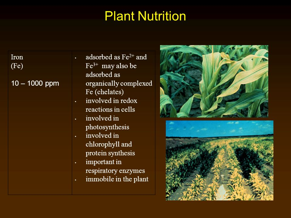 Plant Nutrition Iron (Fe) 10 – 1000 ppm