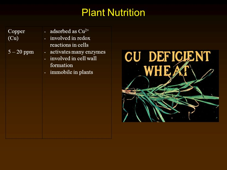 Plant Nutrition Copper (Cu) 5 – 20 ppm adsorbed as Cu2+