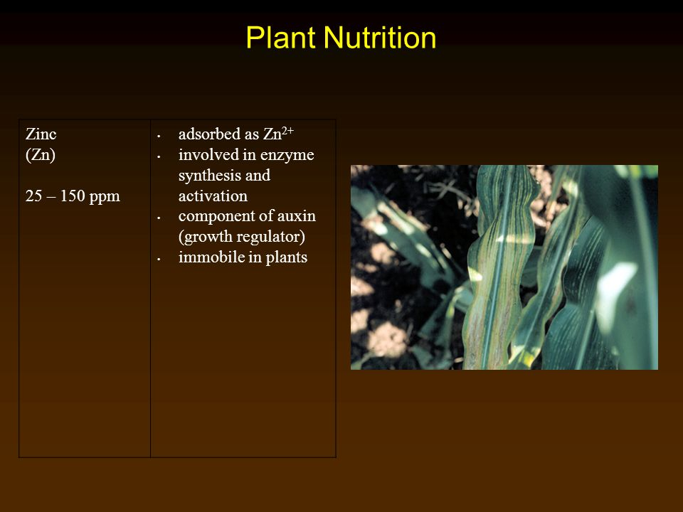 Plant Nutrition Zinc (Zn) 25 – 150 ppm adsorbed as Zn2+