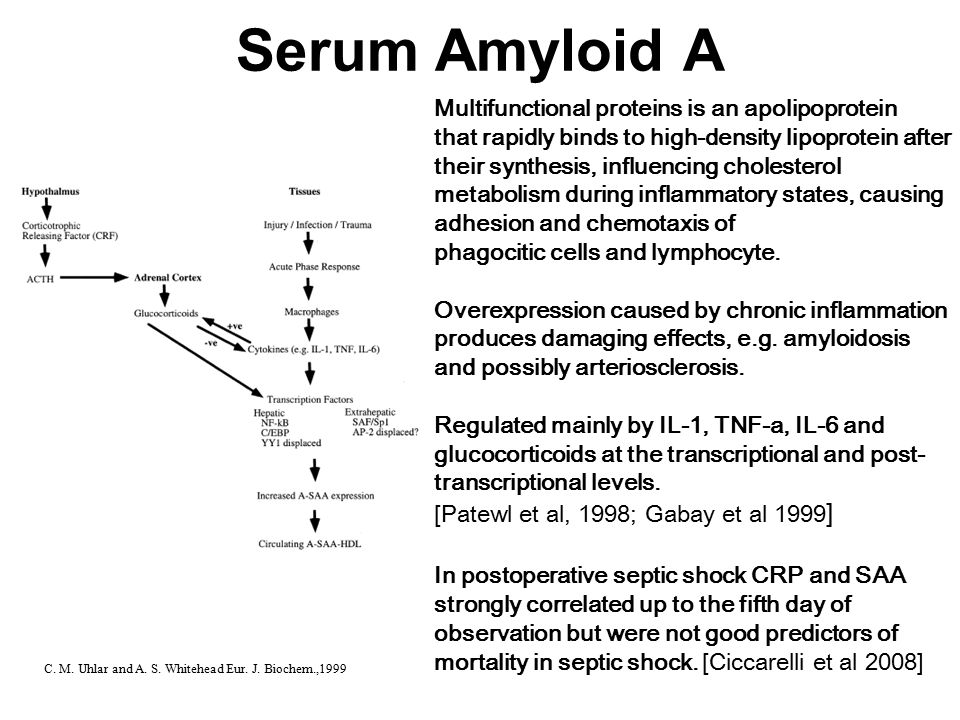 Serum Amyloid A Multifunctional proteins is an apolipoprotein