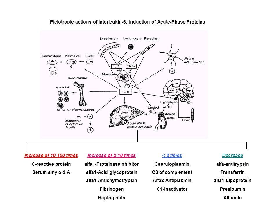 alfa1-Proteinaseinhibitor Caeruloplasmin alfa-antitrypsin