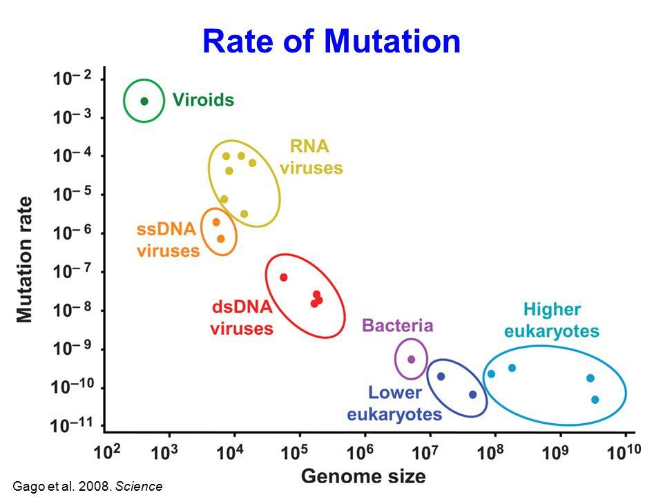 Rate of Mutation Gago et al. 2008. Science