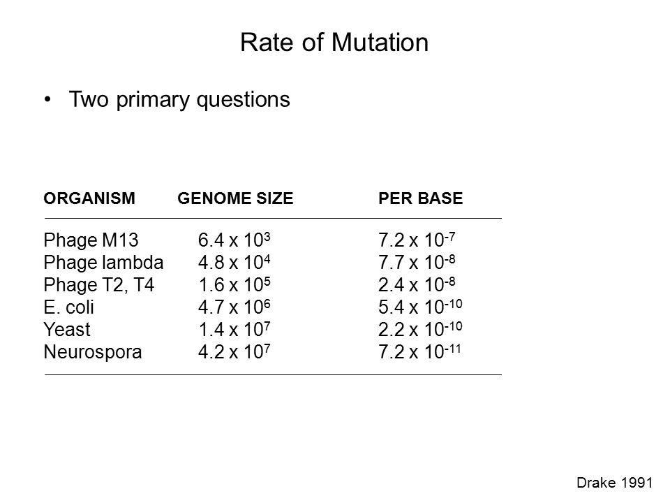 Rate of Mutation Two primary questions