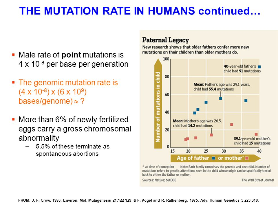 THE MUTATION RATE IN HUMANS continued…