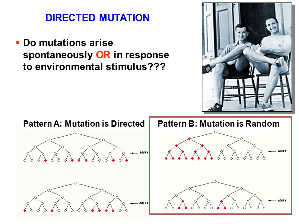 DIRECTED MUTATION Do mutations arise spontaneously OR in response to environmental stimulus Pattern A: Mutation is Directed.