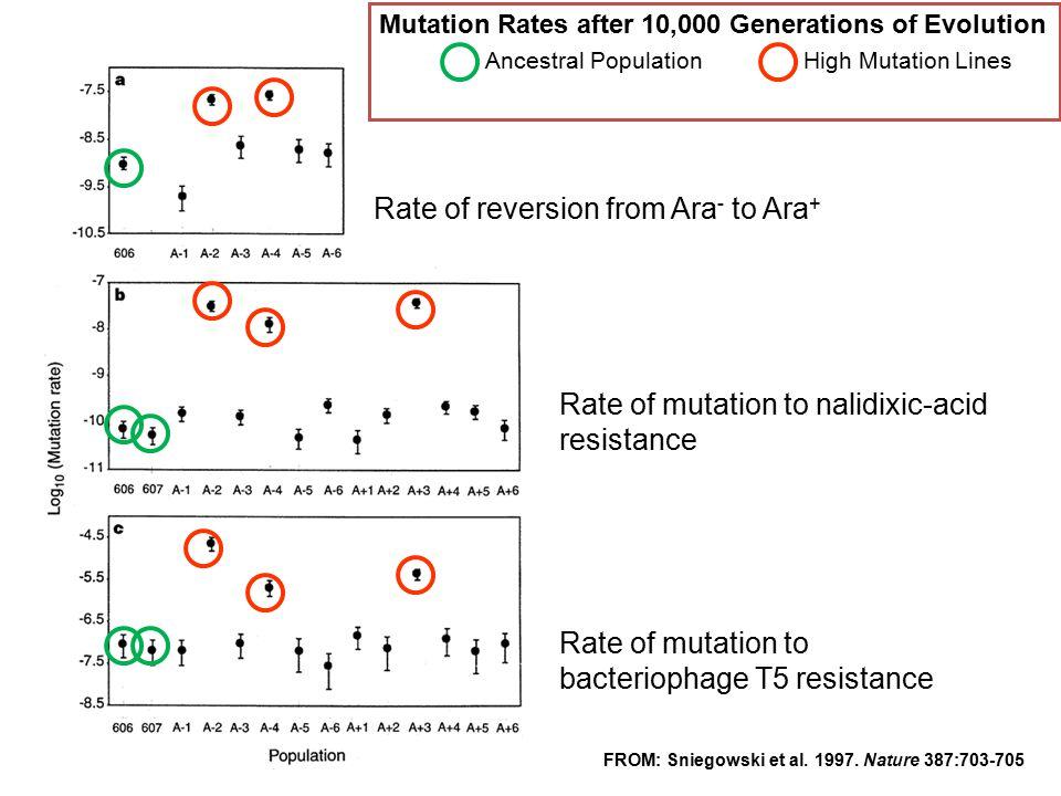 Ancestral Population High Mutation Lines
