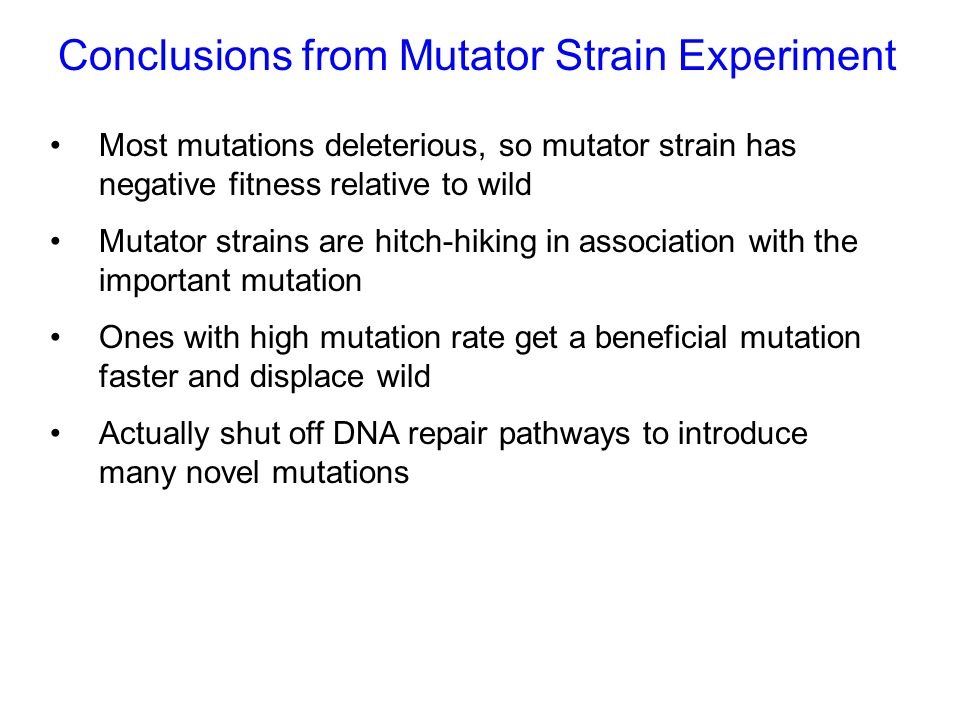 Conclusions from Mutator Strain Experiment