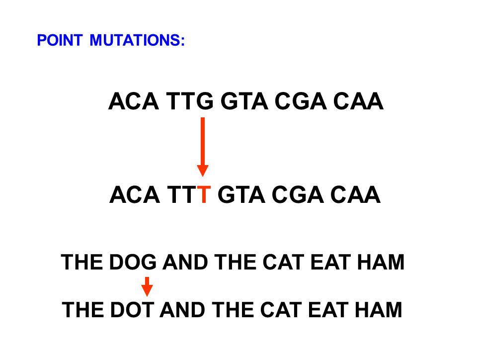 ACA TTG GTA CGA CAA ACA TTT GTA CGA CAA THE DOG AND THE CAT EAT HAM