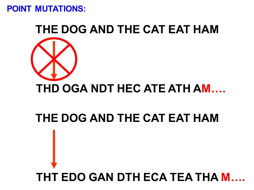 THE DOG AND THE CAT EAT HAM