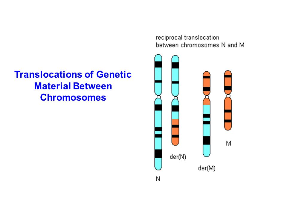 Translocations of Genetic Material Between Chromosomes