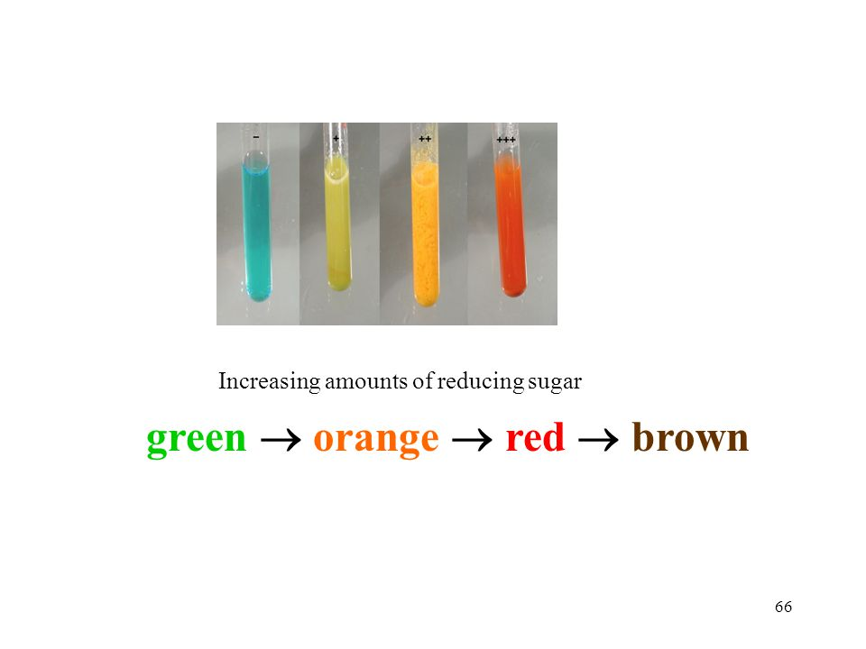 green  orange  red  brown