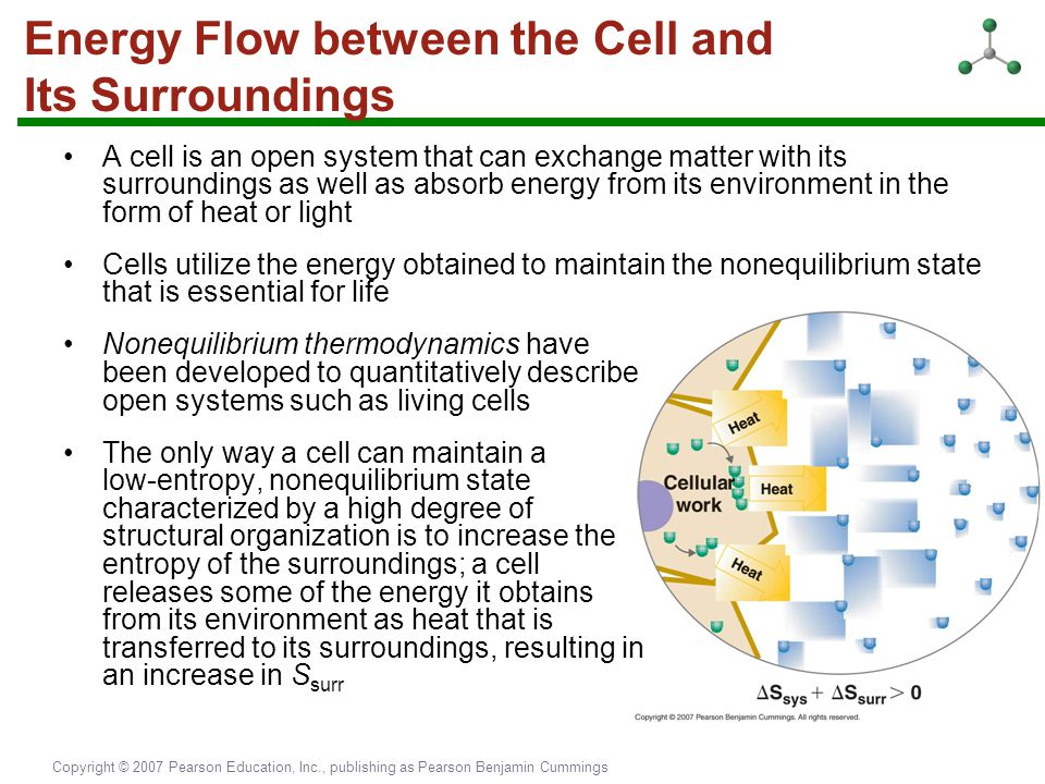 Energy Flow between the Cell and Its Surroundings