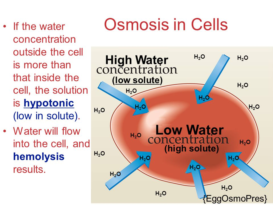 Osmosis in Cells Low Water High Water