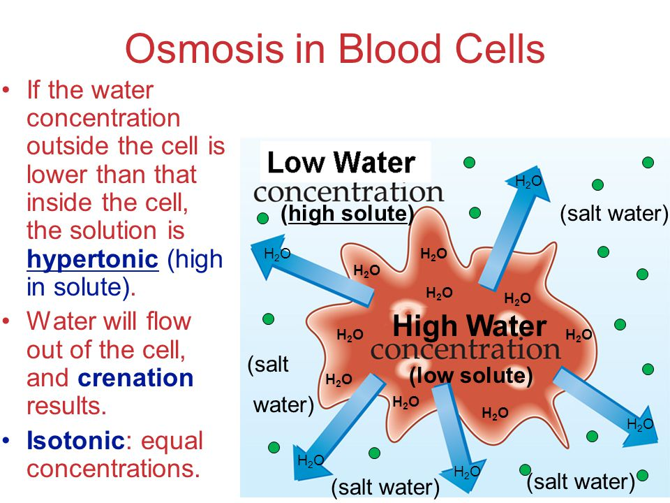 osmosis and highest water concentration Osmosis, tonicity, and hydrostatic pressure which in turn results in net diffusion of water from the compartment with high concentration of free water to that with low concentration of free water the key to remember about osmosis is that water flows from the solution with the lower solute.