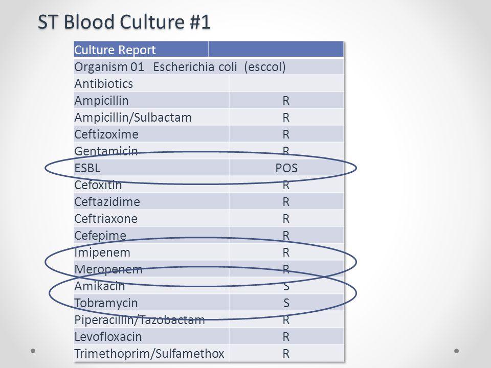 ST Blood Culture #1 Culture Report