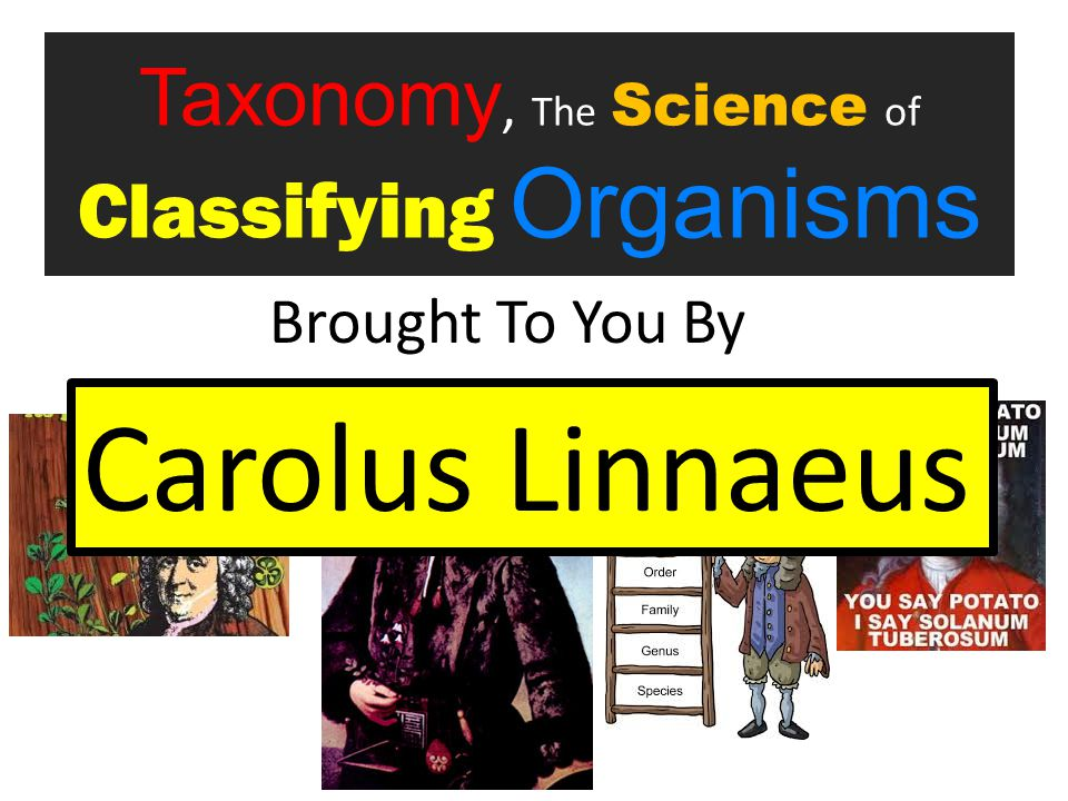 Taxonomy, The Science of Classifying Organisms