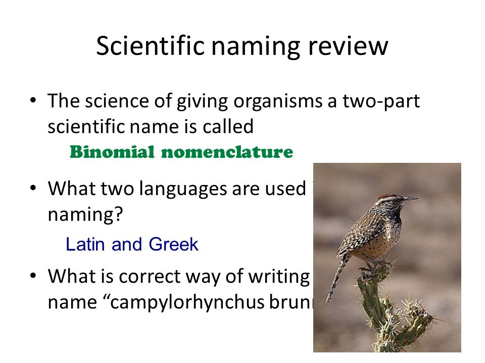 Scientific naming review