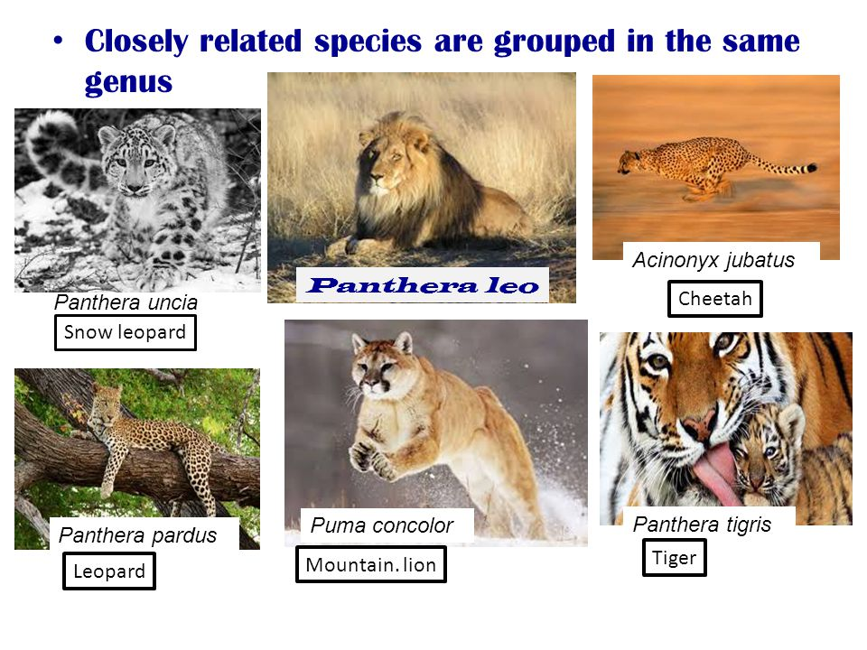 Closely related species are grouped in the same genus