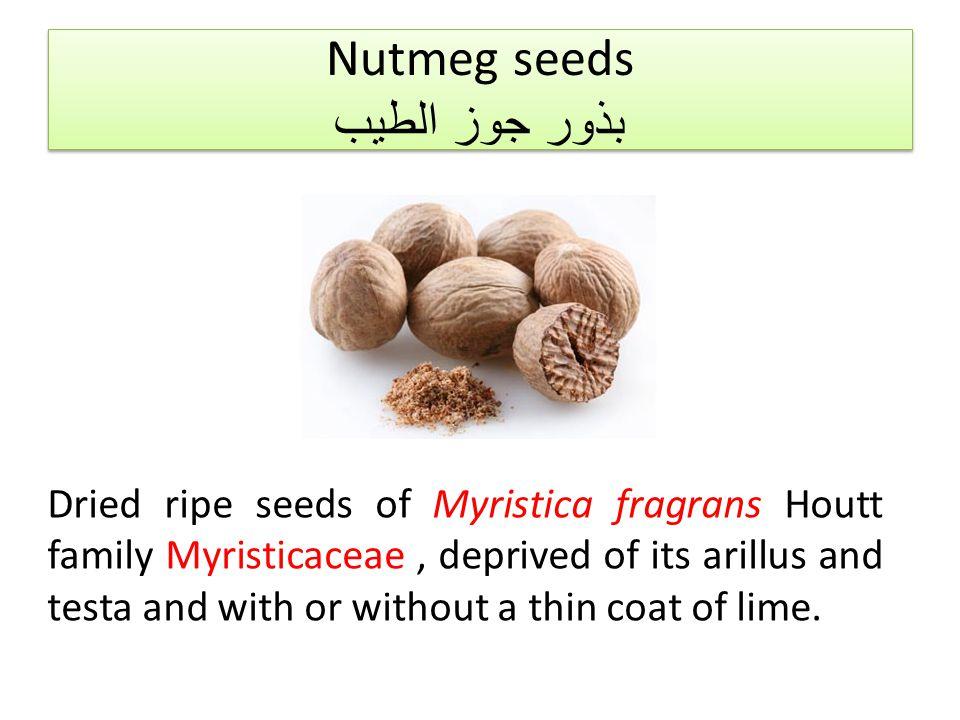 Nutmeg seeds بذور جوز الطيب
