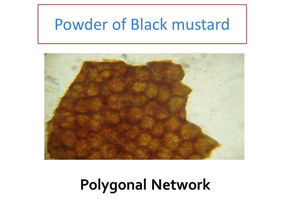 Powder of Black mustard