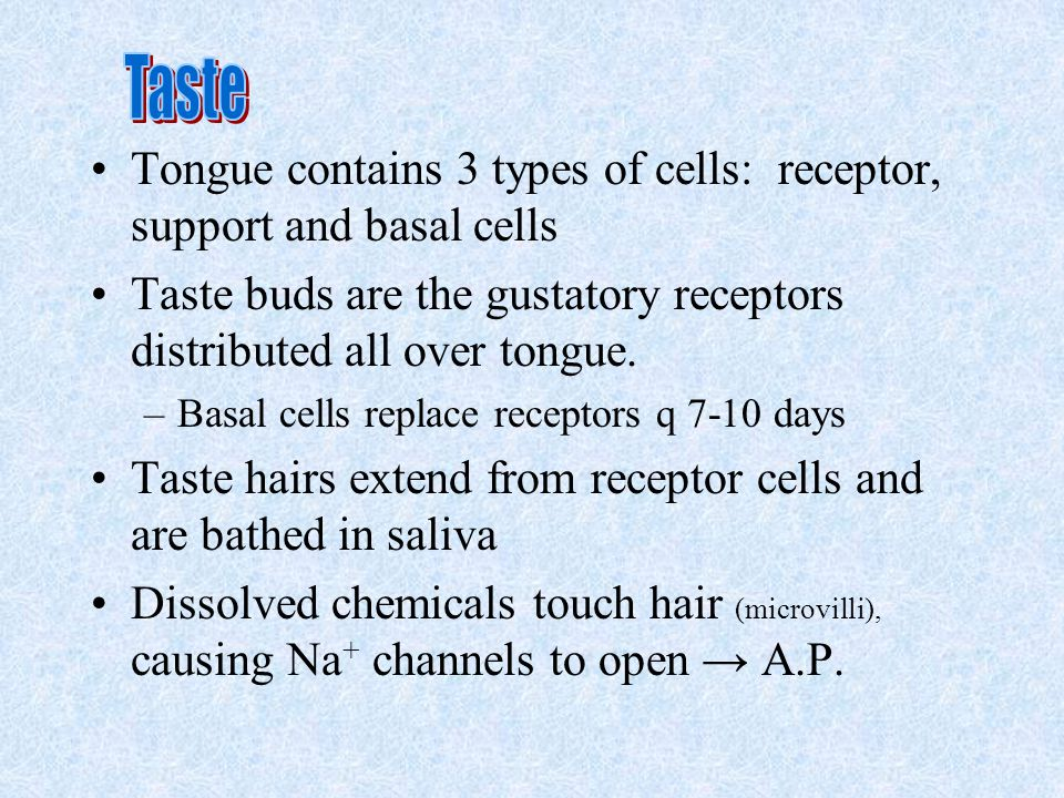 Taste Tongue contains 3 types of cells: receptor, support and basal cells. Taste buds are the gustatory receptors distributed all over tongue.