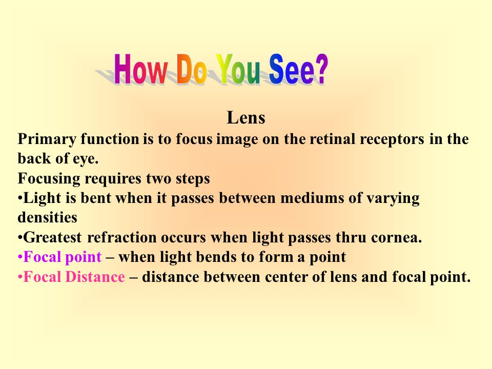 How Do You See Lens. Primary function is to focus image on the retinal receptors in the back of eye.