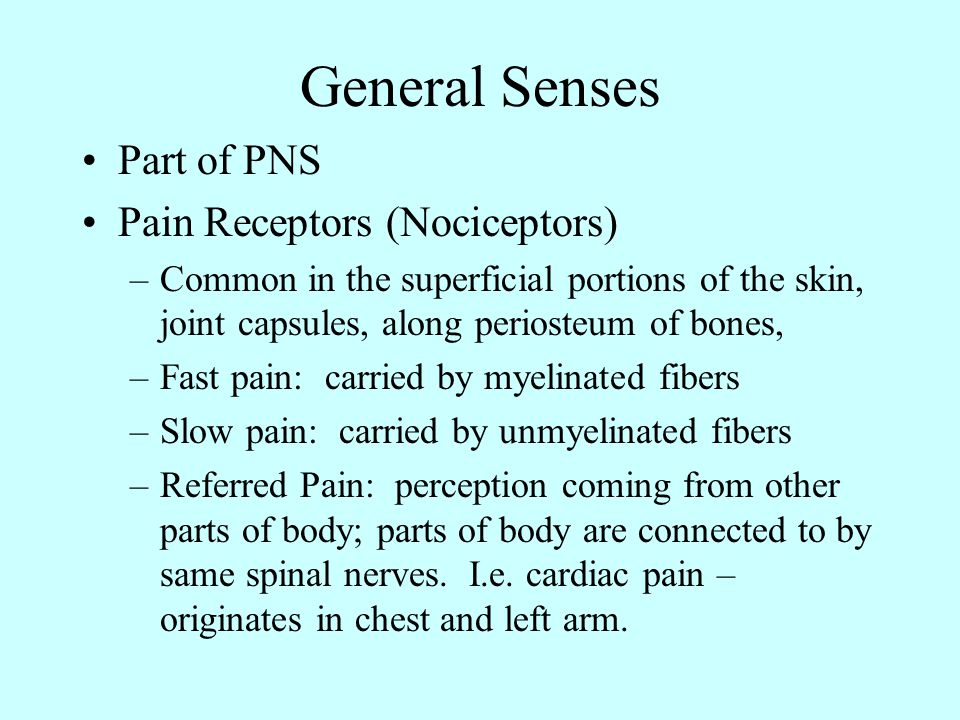 General Senses Part of PNS Pain Receptors (Nociceptors)