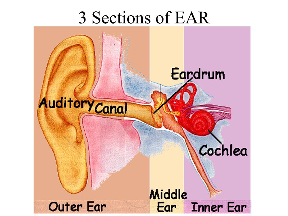 3 Sections of EAR