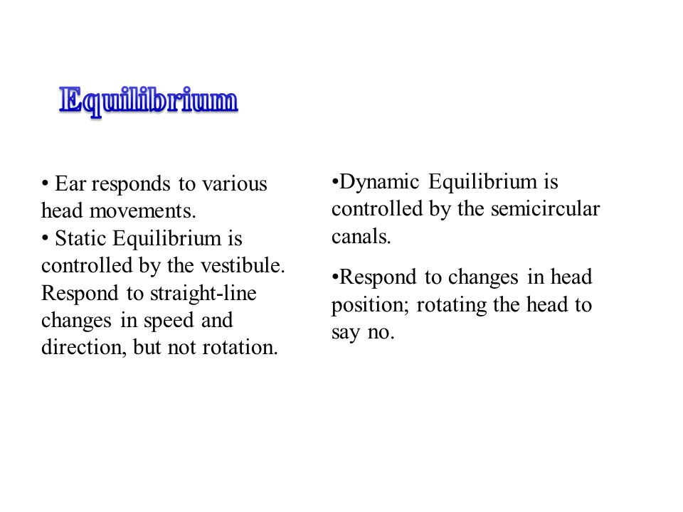 Equilibrium Ear responds to various head movements. Static Equilibrium is controlled by the vestibule.
