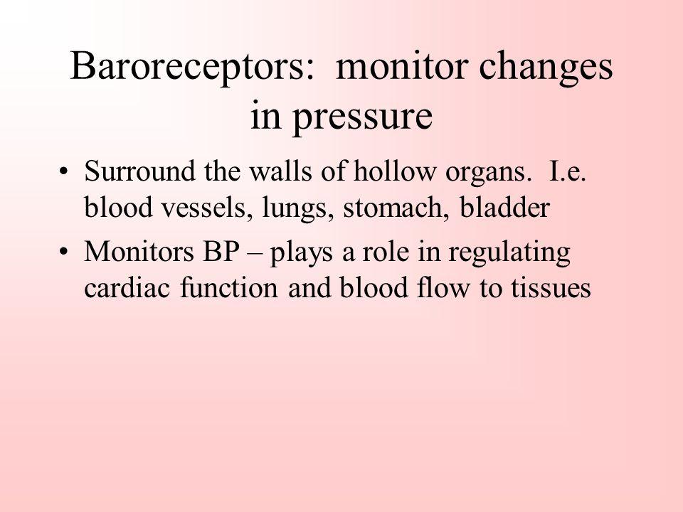 Baroreceptors: monitor changes in pressure
