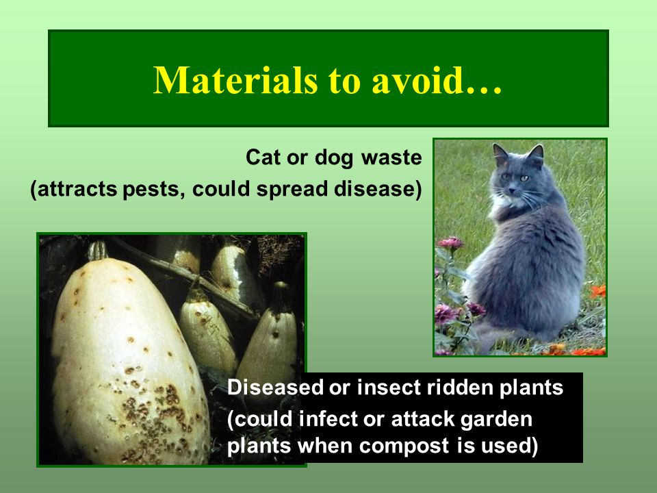 Materials to avoid… Cat or dog waste