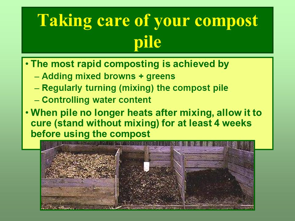 Taking care of your compost pile