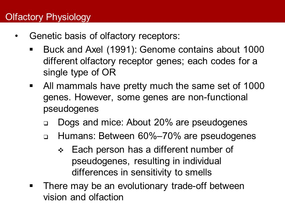 Olfactory Physiology Genetic basis of olfactory receptors: