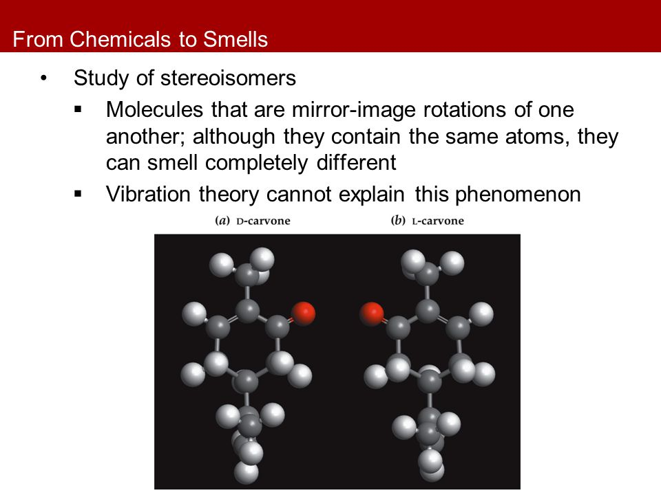 From Chemicals to Smells