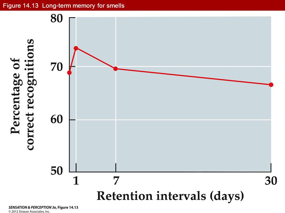 Figure 14.13 Long-term memory for smells