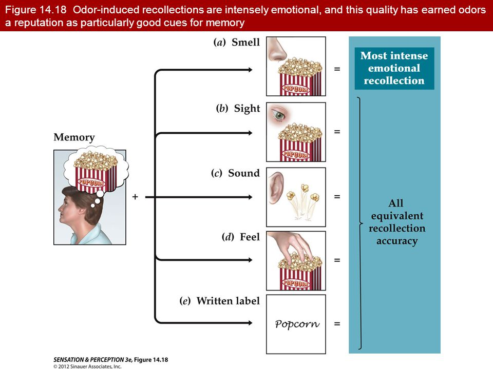 Figure 14.18 Odor-induced recollections are intensely emotional, and this quality has earned odors a reputation as particularly good cues for memory
