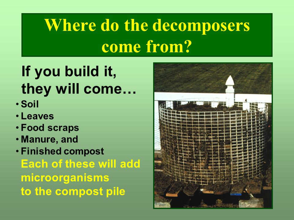 Where do the decomposers come from