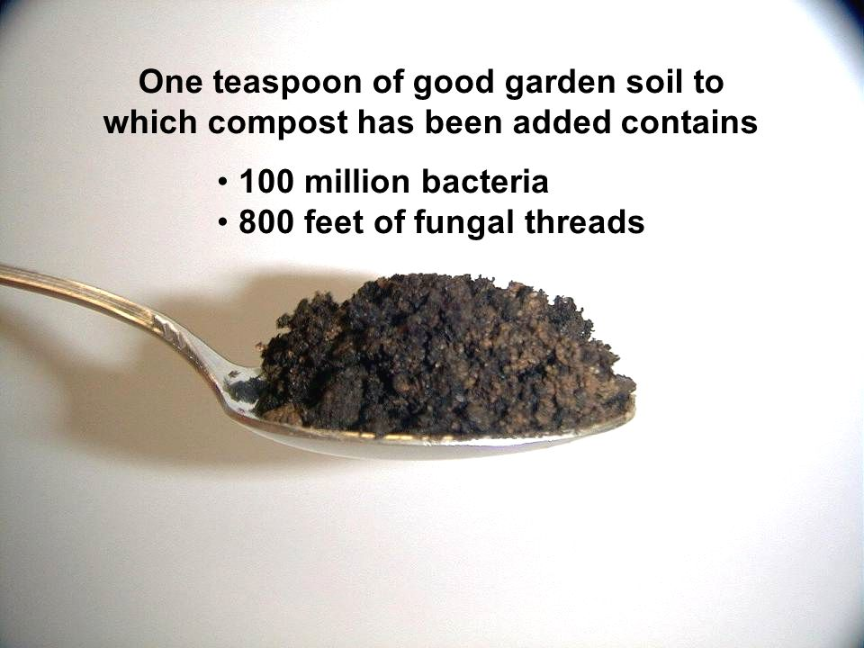 One teaspoon of good garden soil to which compost has been added contains