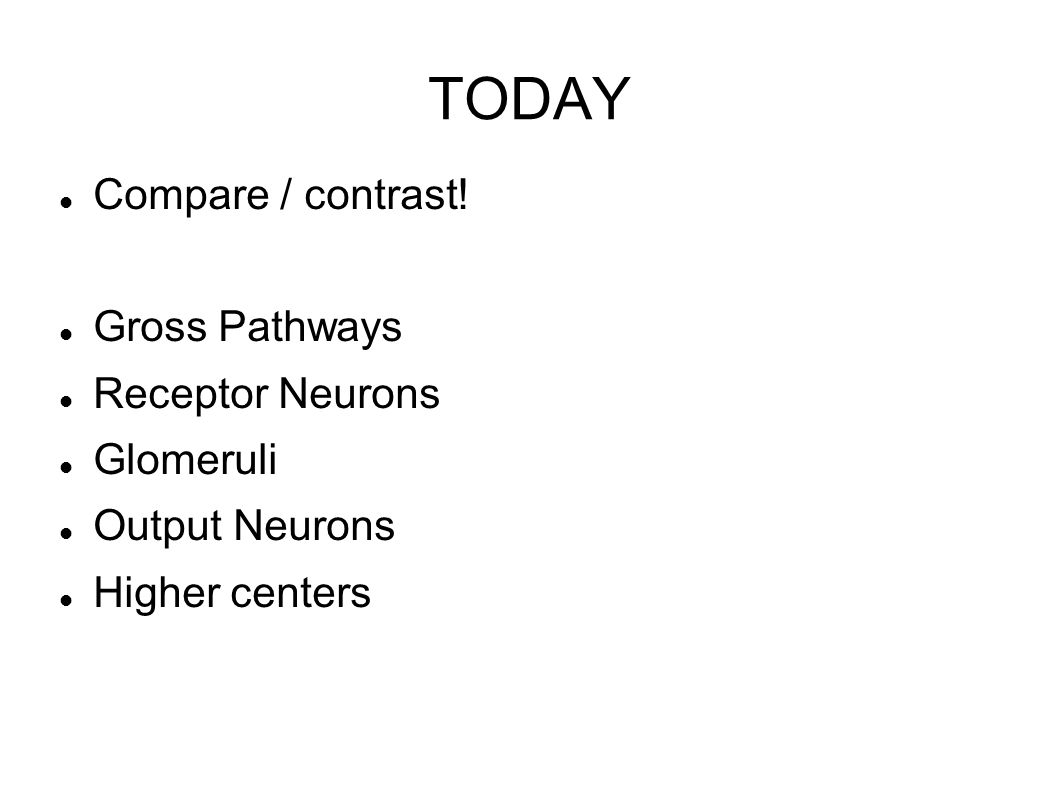 TODAY Compare / contrast! Gross Pathways Receptor Neurons Glomeruli