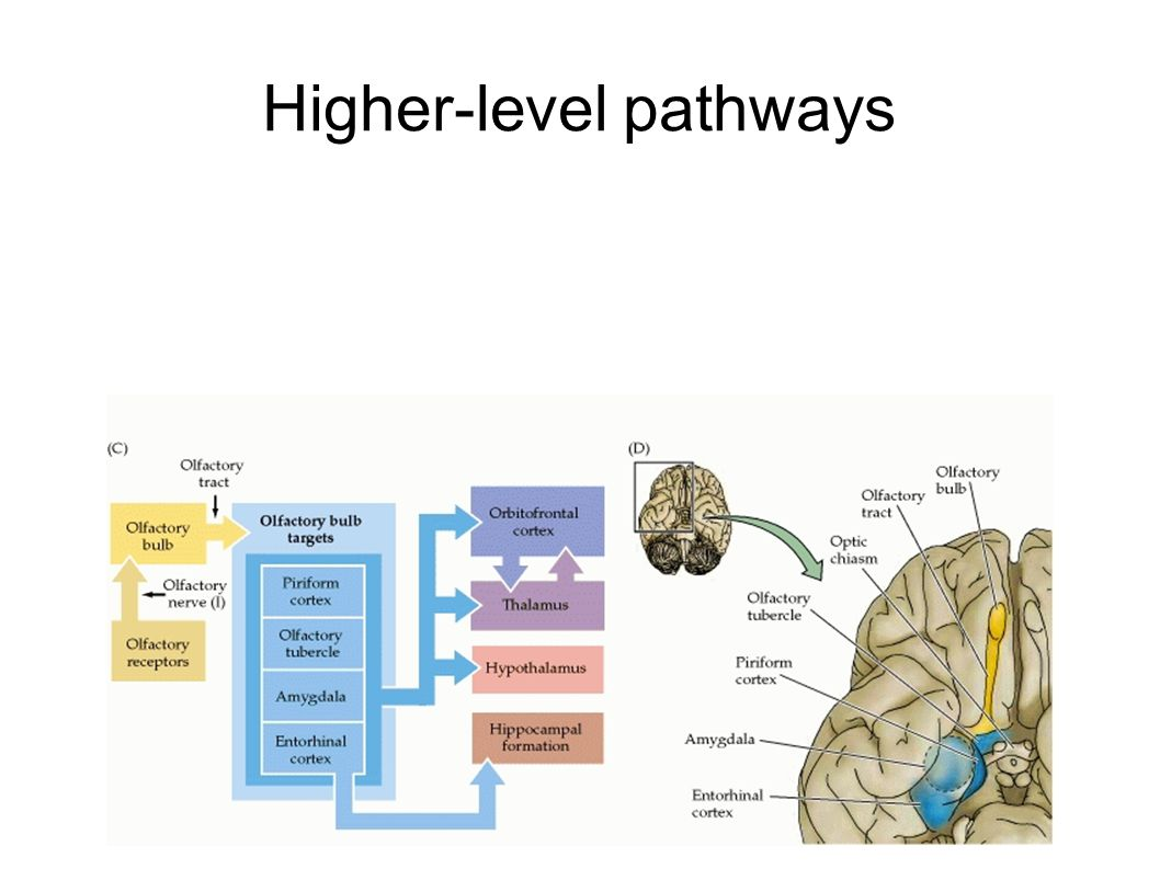 Higher-level pathways